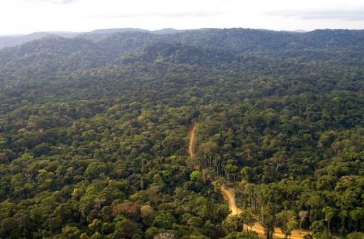 route dans la forêt du bassin du congo