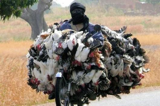 vendeur-africain-poulet