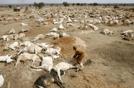 Conséquences de la secheresse au kenya